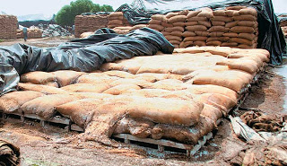 grain stored in india