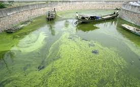 algae hydrogen pond