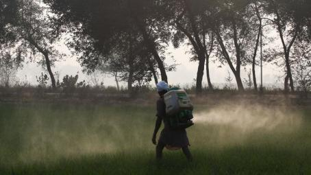 punjab pesticide spraying