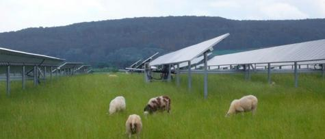sheep grazing solar bavaria